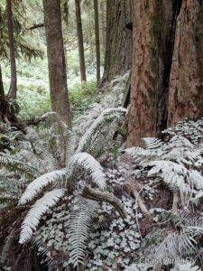 Dusty ferns