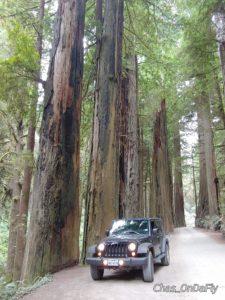 Redwood Giants vs Jeep