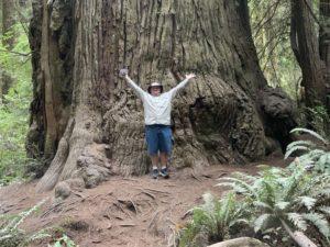 Redwoods - Chuck